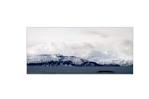 Islandia IV